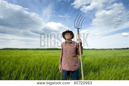 Senior Peasant In Barley Field