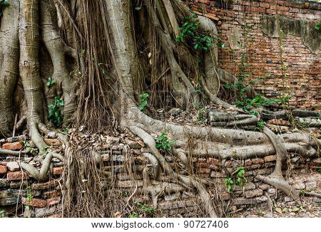 Tree root with brick wall