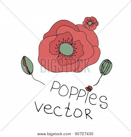 Hand drawn flowers background. Poppies frame