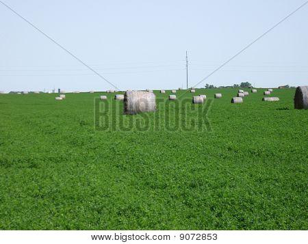 Bales in Alfalfa Field