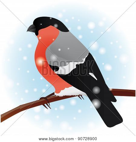 Bullfinch. The winter bird