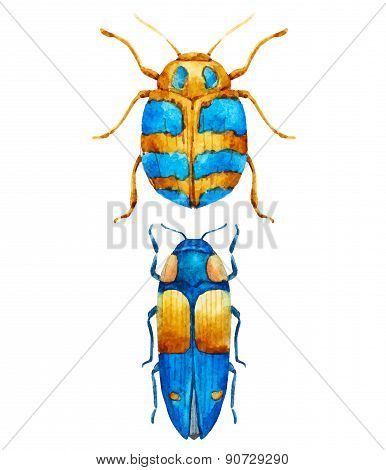 Watercolor bug beetle
