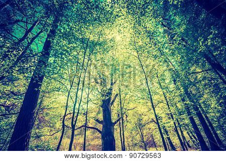 Vintage Photo Of Beautiful Green Springtime Forest Landscape