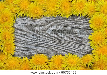 Framing Of Blooming Dandelions On A Wooden Background
