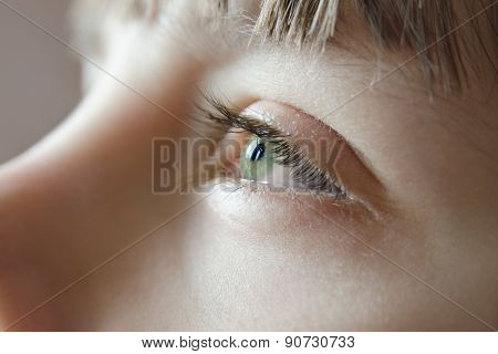 Sunlight reflected in the eyes of the young green