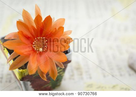 Beautiful Orange Cactus Flower