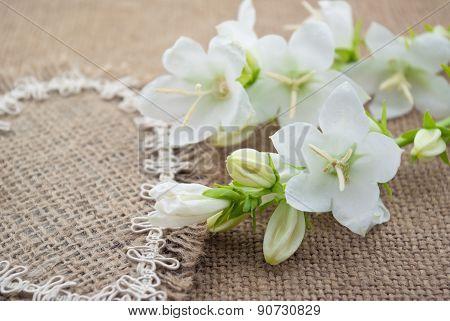 White Flowers Campanula Lie On The Heart Of Coarse Cloth
