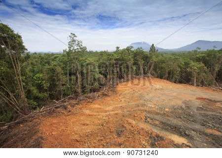 KUCHING, MALAYSIA - MAY 16 2015: Deforestation. Photo of tropical rain forest in Borneo being destroyed to make way for oil palm plantation.