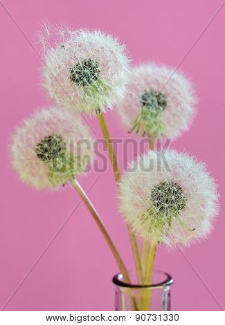 close up of dandelion and water drops