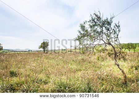 Tree Campaign Sky