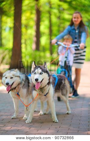 Girl and little boy riding on scooter in team of two dogs in park, focus on dogs