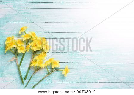 Background With Fresh  Yellow Narcissus