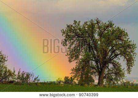 Colorful Optic Rainbow Sky