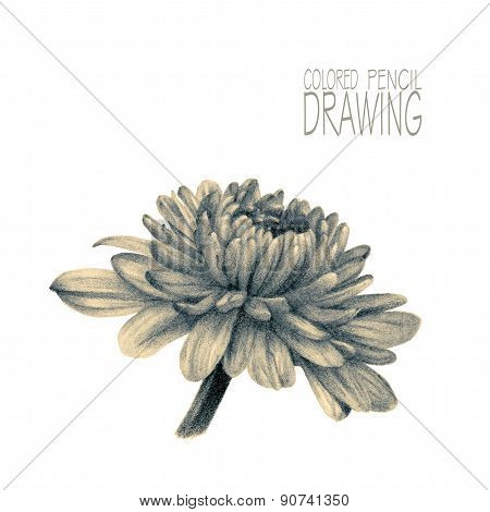 Illustration With Spring Flower