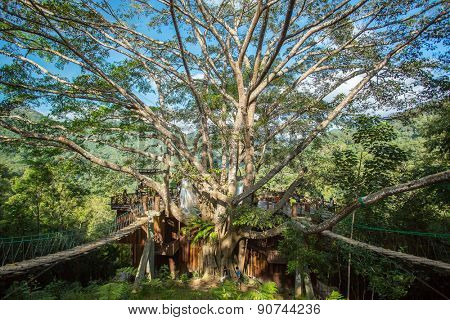 Chiang Mai, Thailand - March 23, 2014: Giant Tree Cafe in the Chiang Mai District, Thailand