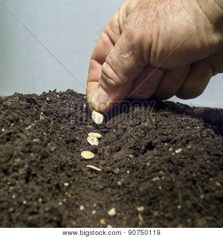 Planting Seeds In The Soil