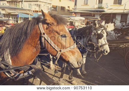Vintage View Of Horses Are Waiting For Their Turn At Prince Islands Near Istanbul, Turkey