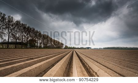 Plough Agriculture Field After Sowing