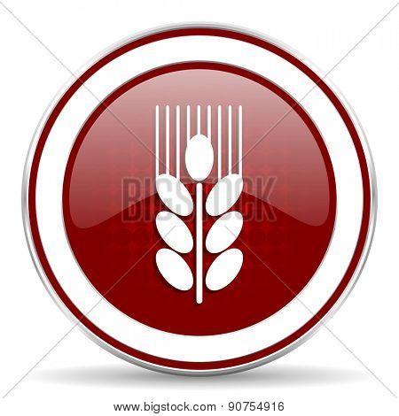 grain red glossy web icon