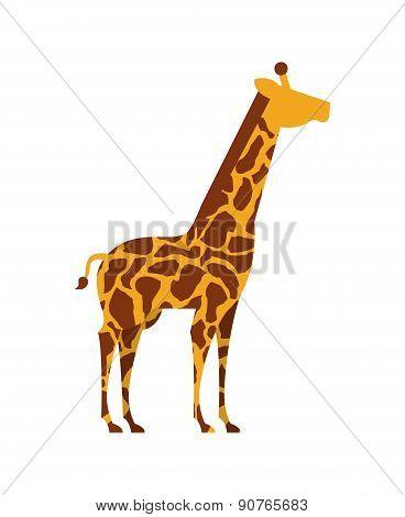 Africa giraffe  design over white background vector illustration