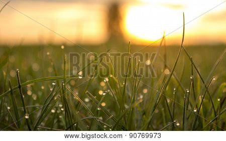Morning Dew Glistens On The Grass In The meadow Sun