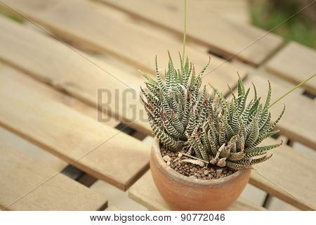 The Cactus In A Pot On The Table