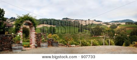 California Vineyard Panorama