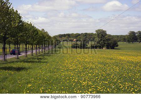 Danish Avenue