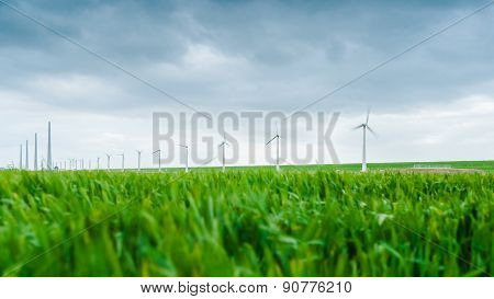 Young Wheat Blowing In The Wind During A Spring Drum. A Wind Farm In The Background