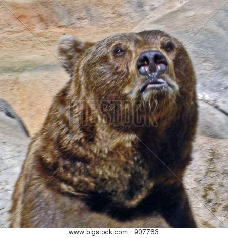 Yogi Brownbear