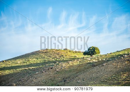Lone Tree On Mountain Hills With Blue Sky