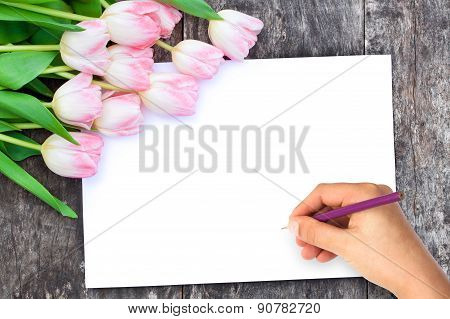 Light Pink Tulips On The Oak Brown Table With White Sheet Of Paper