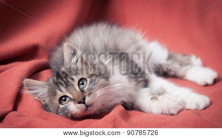 The kitten on the orange coat.