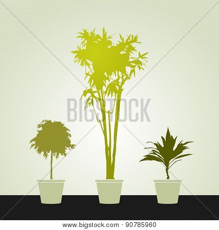 Set Of Houseplants