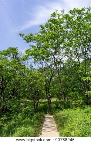 Lush Forest With A Hiking Trail
