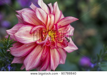 Beautiful Pink Autumn Flower Design.with Copy-space
