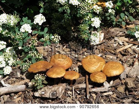 mushroom in the park