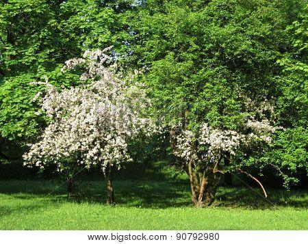 white bushes