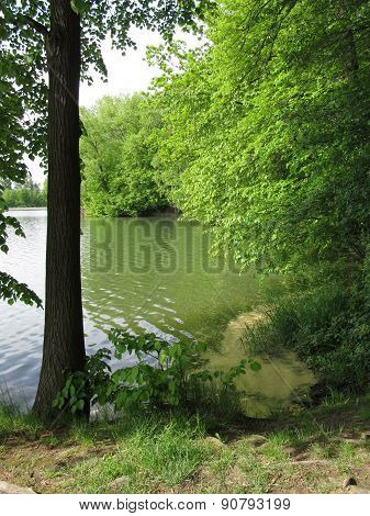 trees on the bank of a pond