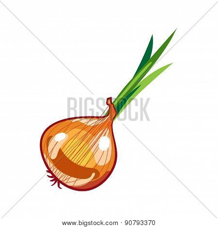 Vector fresh brown onions on white.