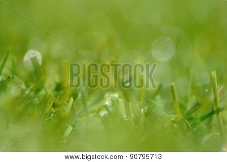 Green Grass With Bokeh Background