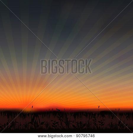 sunset grassland