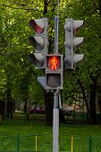 pic of pedestrians  - pedestrian traffic lights on the trees background - JPG