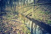 image of wetland  - Vintage photo of wetlands at springtime - JPG