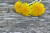 picture of eukaryote  - Yellow dandelion flowers on a wooden background - JPG
