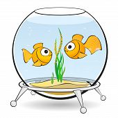 stock photo of goldfish  - couple goldfish in an aquarium looking at caviar - JPG