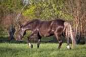 pic of brown horse  - Beautiful brown horse has fun in the summer meadow - JPG