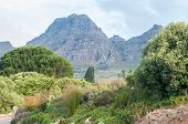 picture of fynbos  - View of the farm Hidden Valley with the Helderberg  - JPG