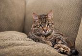 foto of couch  - Beautiful cat lies on the couch nestled between the back cushion and a matching pillow - JPG