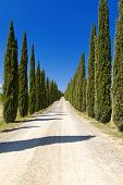 stock photo of row trees  - Cypress Trees rows and a white road rural landscape in Montalcino land near Siena Tuscany Italy Europe - JPG